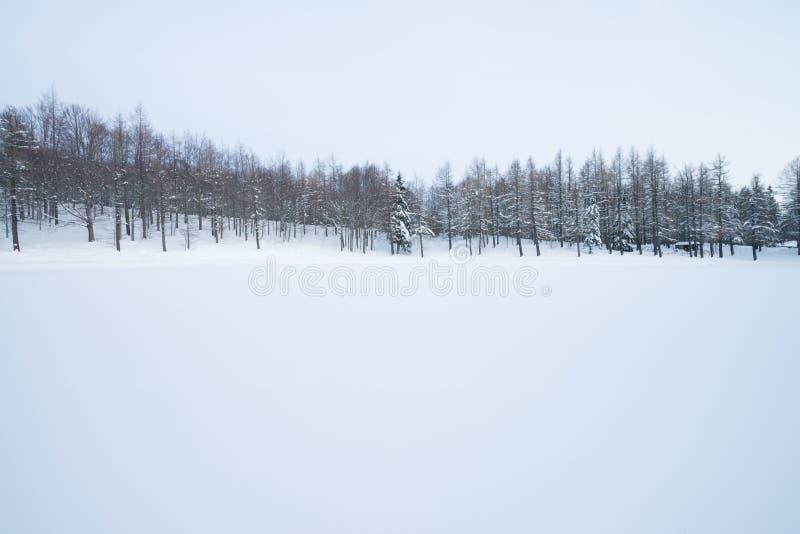 有山毛榉树的冬天森林和Pinophyta用白雪盖了 r 冬天场面在意大利 库存照片