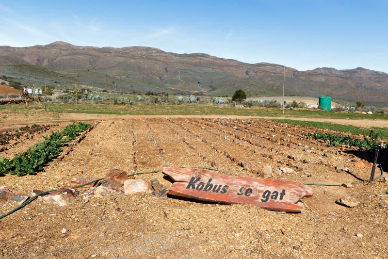 有山的农田在Swartberg通行证 免版税库存图片