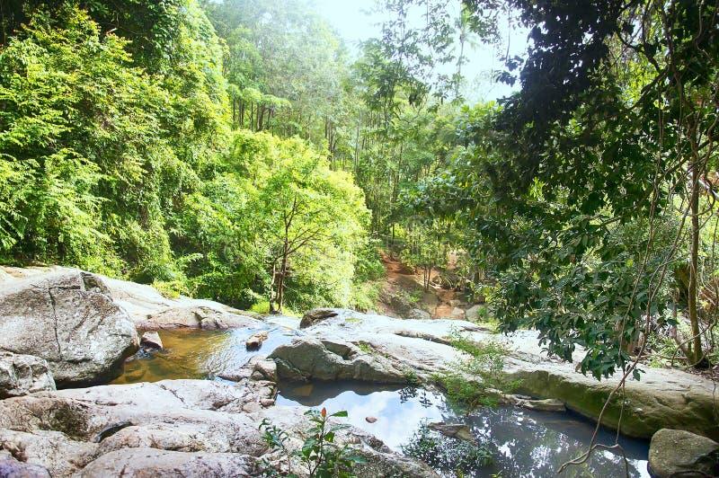 有山sream的酸值苏梅岛热带森林 库存照片