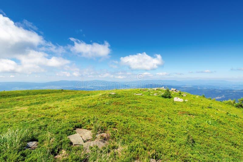 有岩石的象草的草甸在小山顶部 免版税库存照片