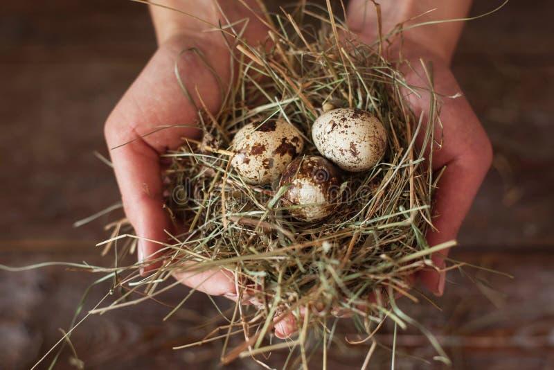 有巢和鹌鹑蛋舱内甲板位置的手 图库摄影