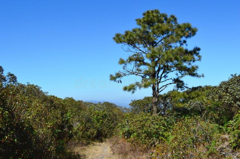 Download 有布什的走道与 库存图片. 图片 包括有 本质, 路径, 结构树, 远程, 春天, 曲线, 灌木, 黑暗 - 59108491