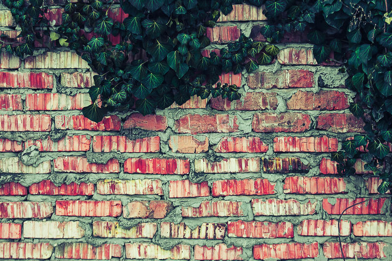 有常春藤的砖篱芭离开纹理 库存图片