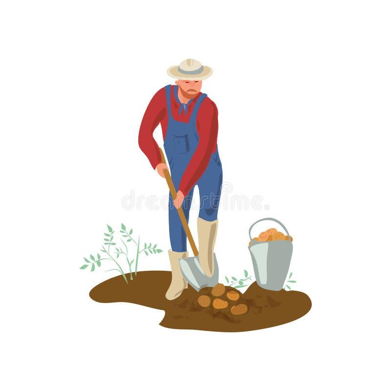 有帽子和起动的农夫人在庭院里开掘土豆 向量例证