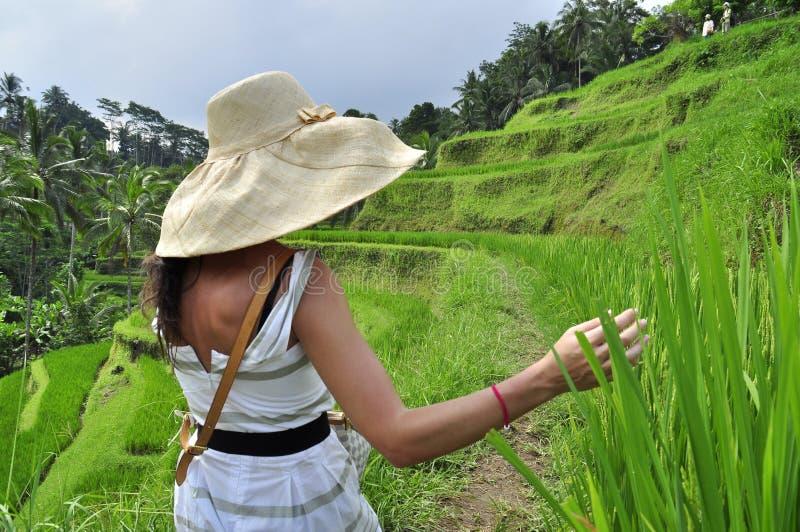 有帽子的妇女在米领域在巴厘岛,豪华放松 库存图片