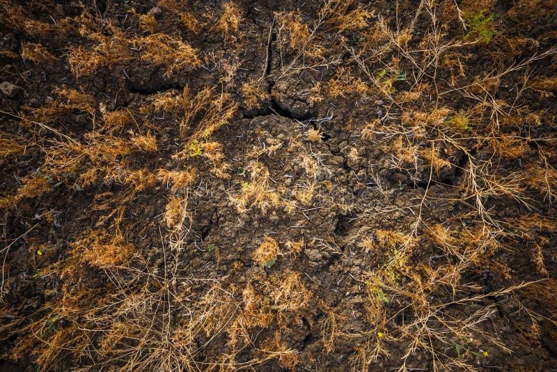 有干燥和破裂的地面的,托斯卡纳,意大利土地 图库摄影