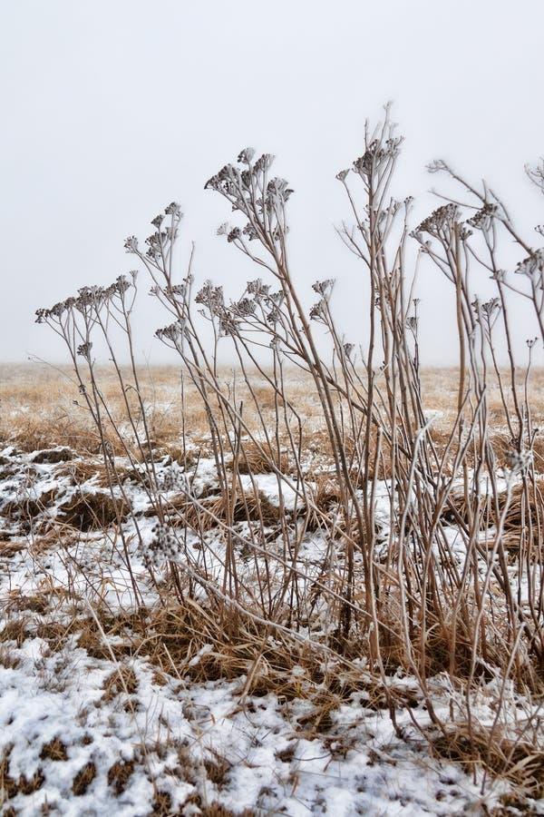 有干燥植被的冬天大草原 库存照片