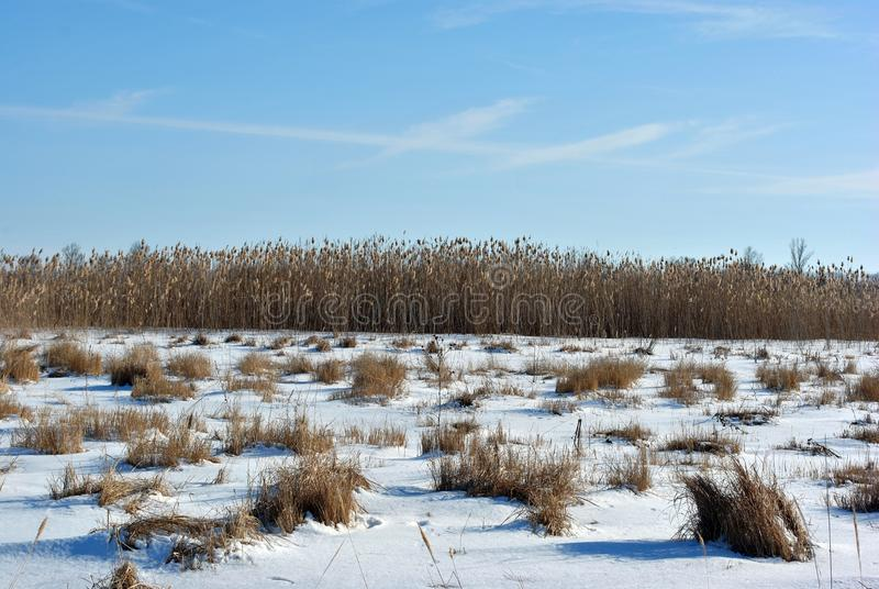 有干燥草覆盖的草甸与雪,芦苇,与云彩的天空蔚蓝线在天际的 库存照片