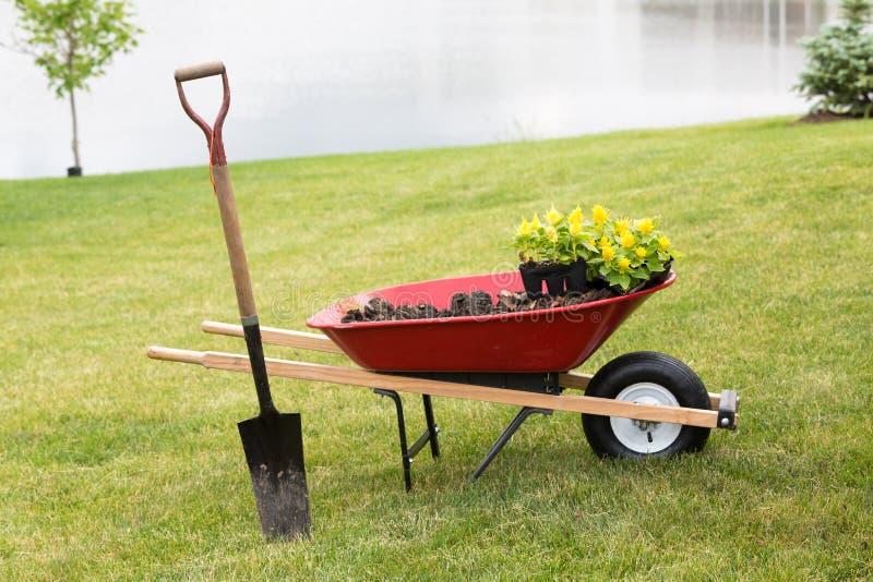 有幼木和锹的独轮车 免版税库存图片
