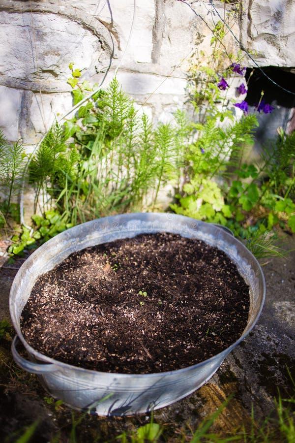 有幼木的管在庭院里 库存照片