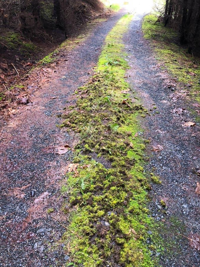 有废弃的路在山的青苔 图库摄影
