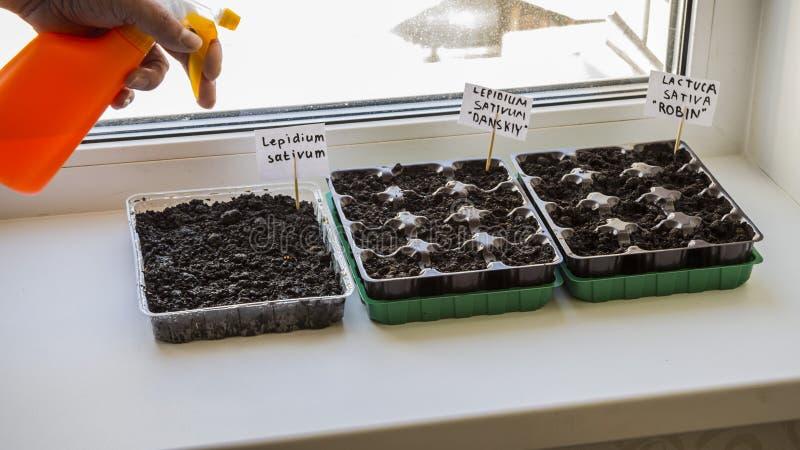 有庭院土壤的几塑胶容器 被种植的幼木图象 免版税库存图片