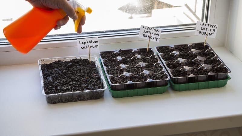 有庭院土壤的几塑胶容器 被种植的幼木图象 免版税图库摄影