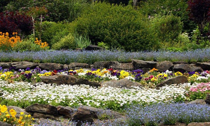 有开花的多年生植物的假山花园 免版税库存照片