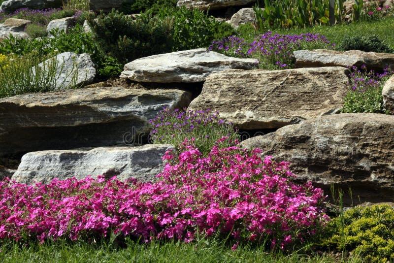 有开花的多年生植物的假山花园 库存图片