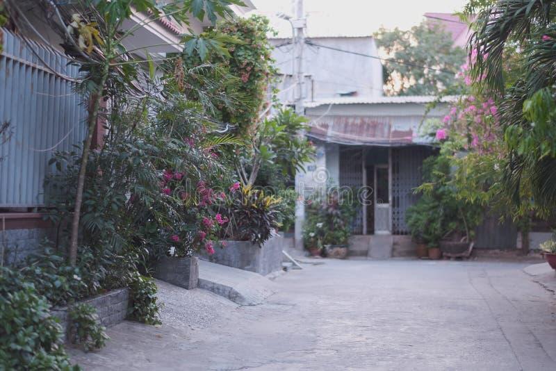 有开花的热带植物一条小城市街道 库存图片