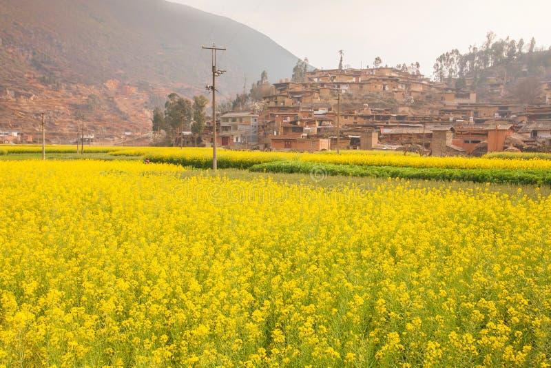 有开花的芥末fie的美丽的老迷人的中国村庄 免版税图库摄影