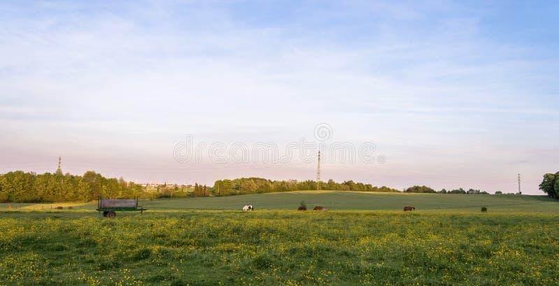 有开花的野花和马的草甸 免版税库存照片