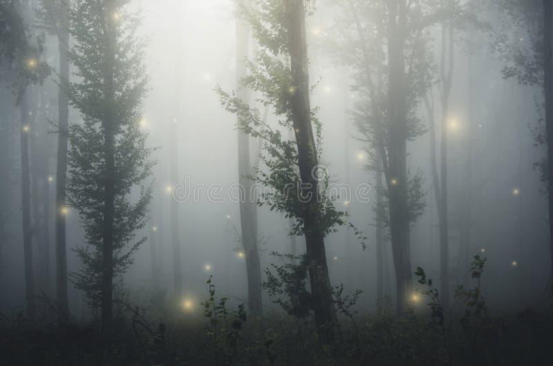 有彩色小灯的童话森林在神奇幻想森林里 免版税库存照片