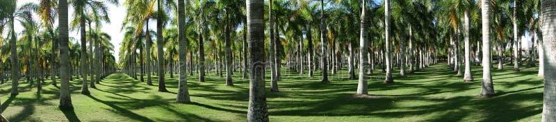 有很多棕榈的一个公园在多米尼加 免版税库存照片