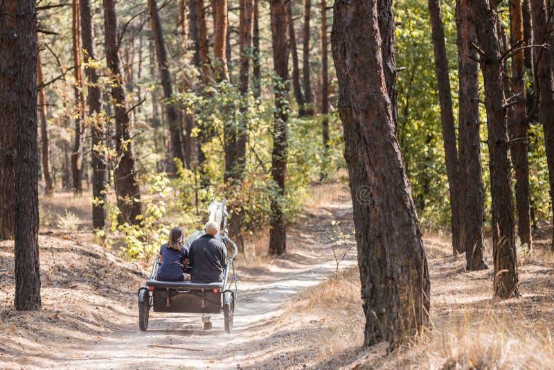 有快速地审阅尘土农村蟾蜍的秋天森林的三个车手的阴沉的推车利用的美丽的起斑纹灰色马,  免版税库存照片