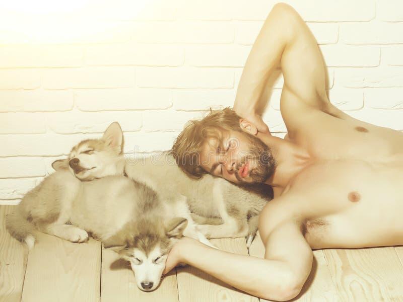 有性感的身体的,睡觉多壳的狗,小狗宠物肌肉人 免版税图库摄影