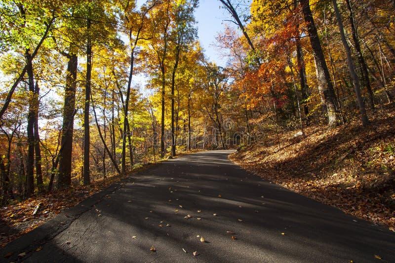 有惊人的颜色和低有角度的阳光的秋天路 免版税库存图片