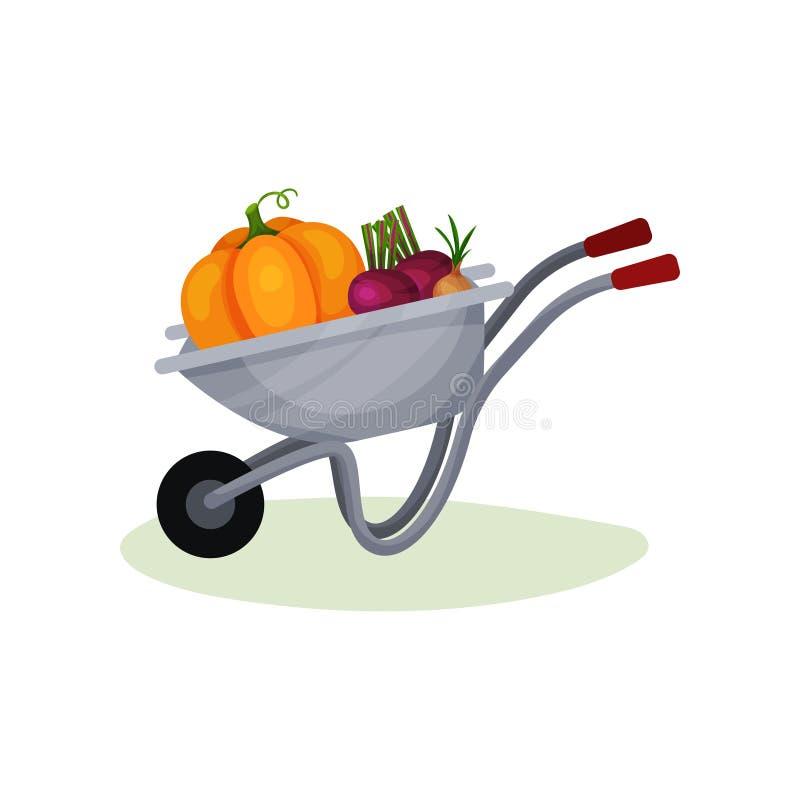 有成熟菜的灰色庭院推车 金属化独轮车用甜菜、大橙色南瓜和葱 从农场的庄稼 平面 向量例证