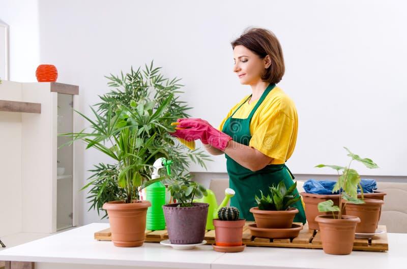 有户内植物的女性花匠 免版税图库摄影