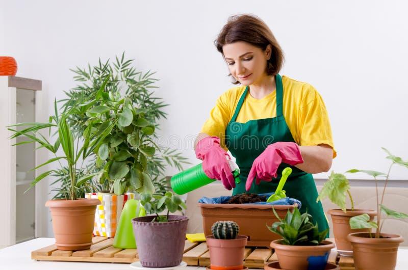 有户内植物的女性花匠 库存图片
