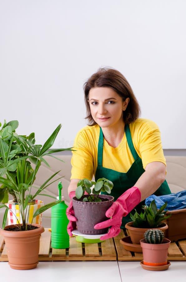 有户内植物的女性花匠 库存照片