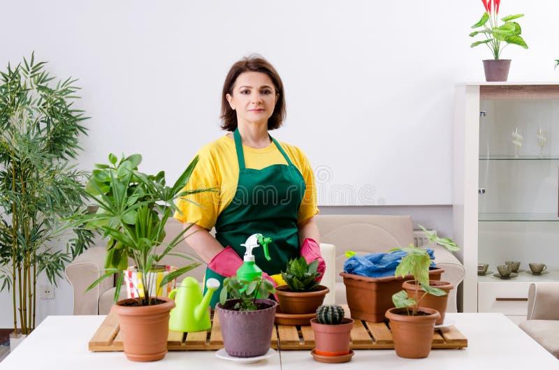 有户内植物的女性花匠 免版税库存照片