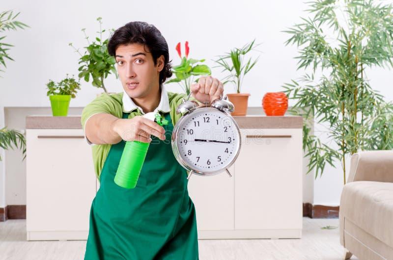有户内植物的年轻男性花匠 图库摄影