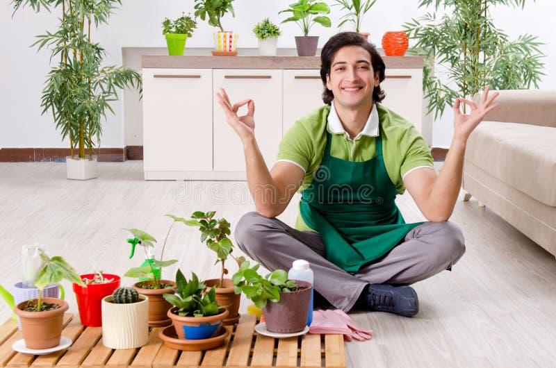 有户内植物的年轻男性花匠 免版税库存照片