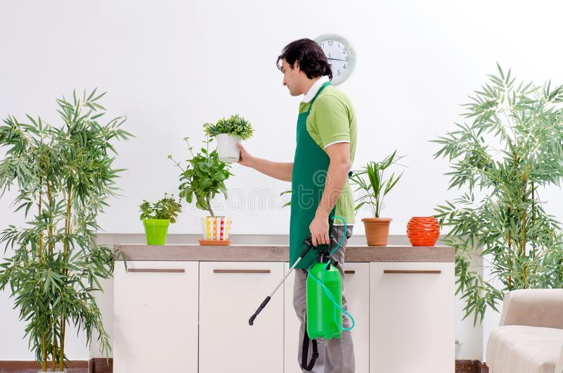 有户内植物的年轻男性花匠 免版税图库摄影
