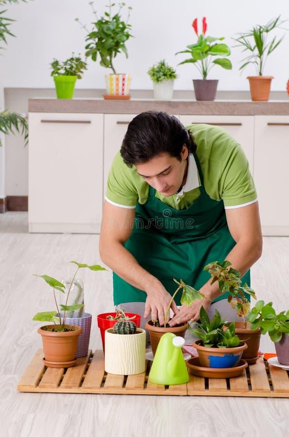 有户内植物的年轻男性花匠 库存图片