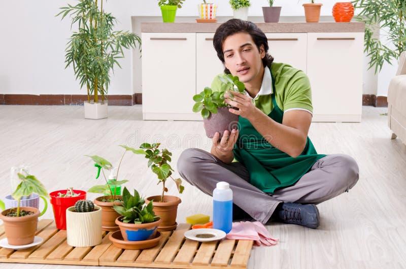 有户内植物的年轻男性花匠 库存照片