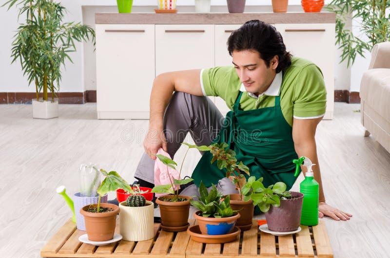有户内植物的年轻男性花匠 免版税库存图片