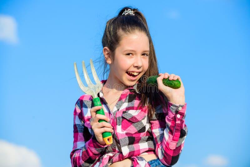 有手犁耙的女孩花匠 从事园艺和收获概念 从事园艺的活动 小女孩在家庭的花匠工作 库存图片