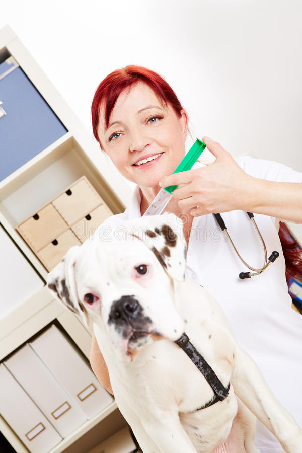 有狗和注射器的兽医 免版税库存图片