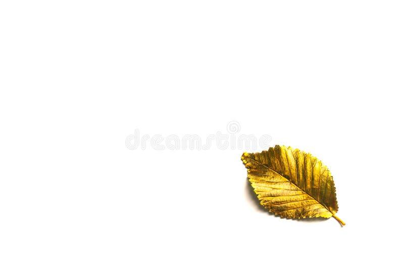 有拷贝空间的秋天金黄叶子 免版税图库摄影
