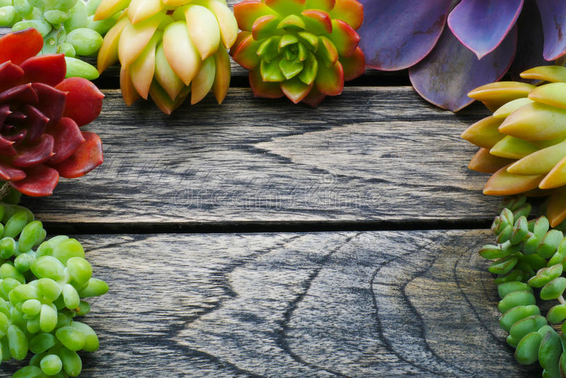 有拷贝空间的顶视图逗人喜爱的五颜六色的多汁植物在木桌背景的文本的 免版税库存图片