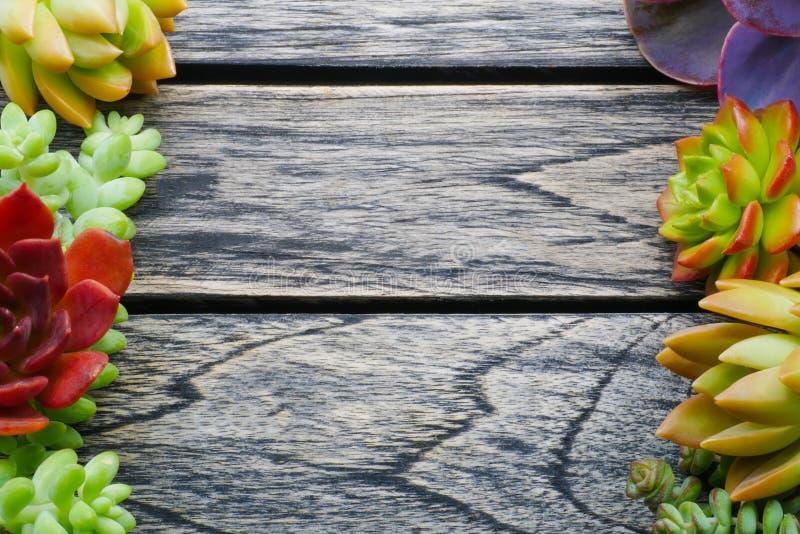 有拷贝空间的顶视图逗人喜爱的五颜六色的多汁植物文本的 库存图片