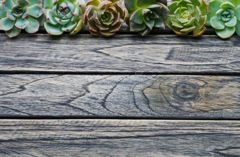有拷贝空间的顶视图逗人喜爱的多汁植物在木桌背景的文本的 库存图片
