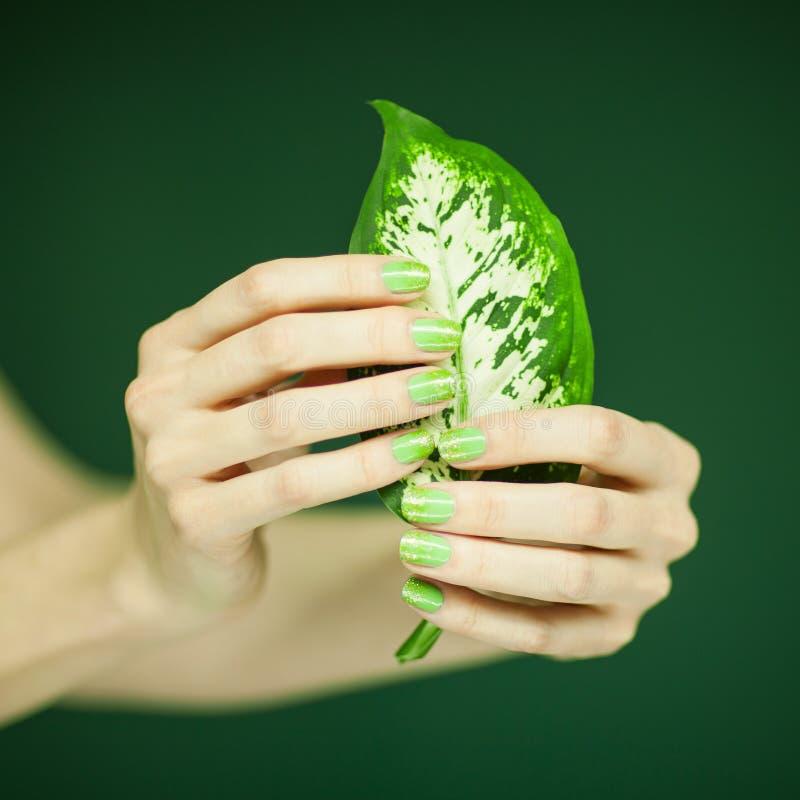 有拿着一些热带叶子的绿色指甲油的妇女手. 装饰, 照亮.图片