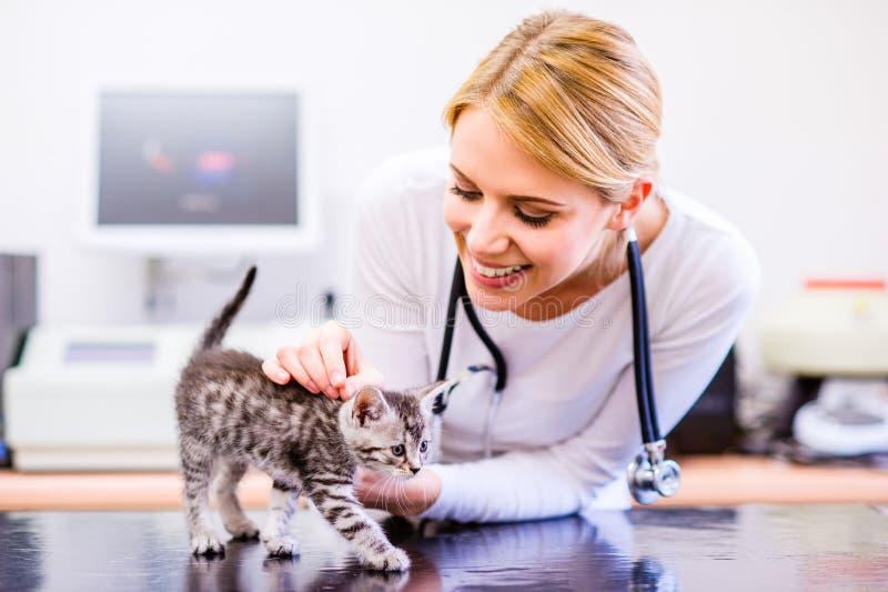有拿着小的疼痛猫的听诊器的兽医 Veterinar 免版税库存图片