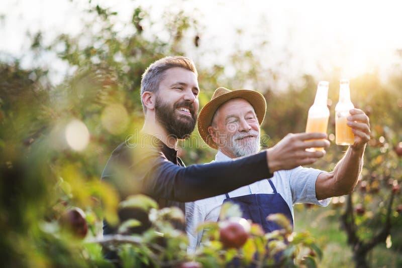 有拿着瓶用萍果汁的成人儿子的一名老人在苹果树在秋天 免版税库存照片