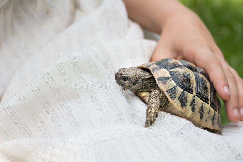 有拿着草龟的一件白色礼服的小女孩 免版税库存图片