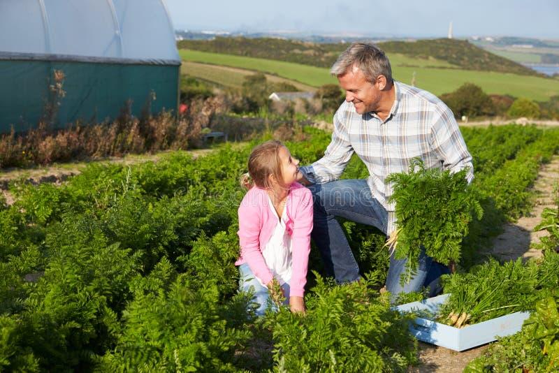 有收获在农场的女儿的农夫有机红萝卜庄稼 库存照片