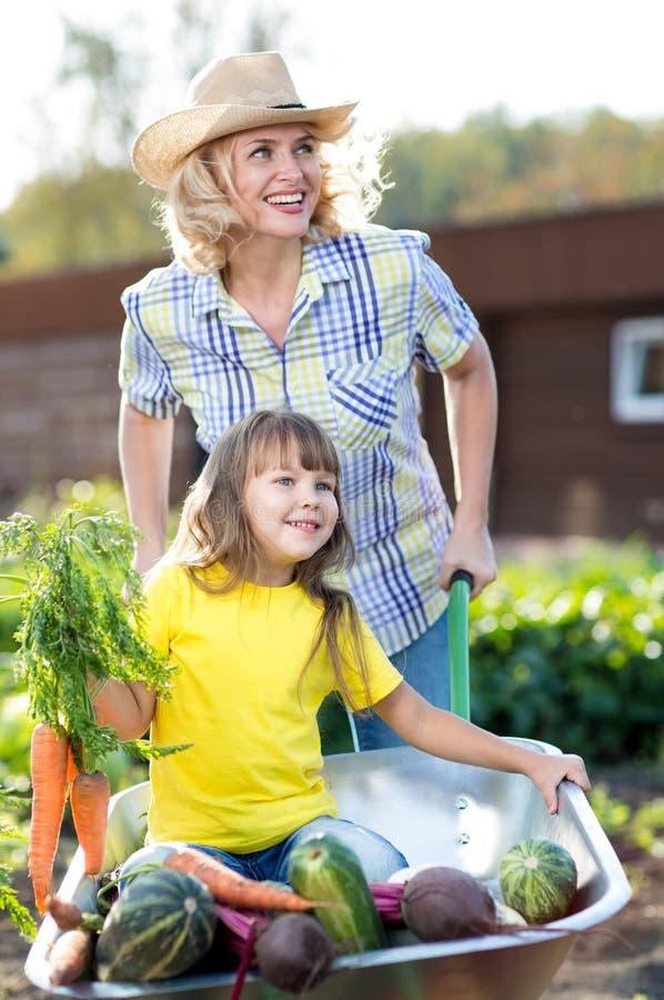 有收获孩子的家庭花匠坐有新鲜蔬菜的独轮车 免版税库存图片